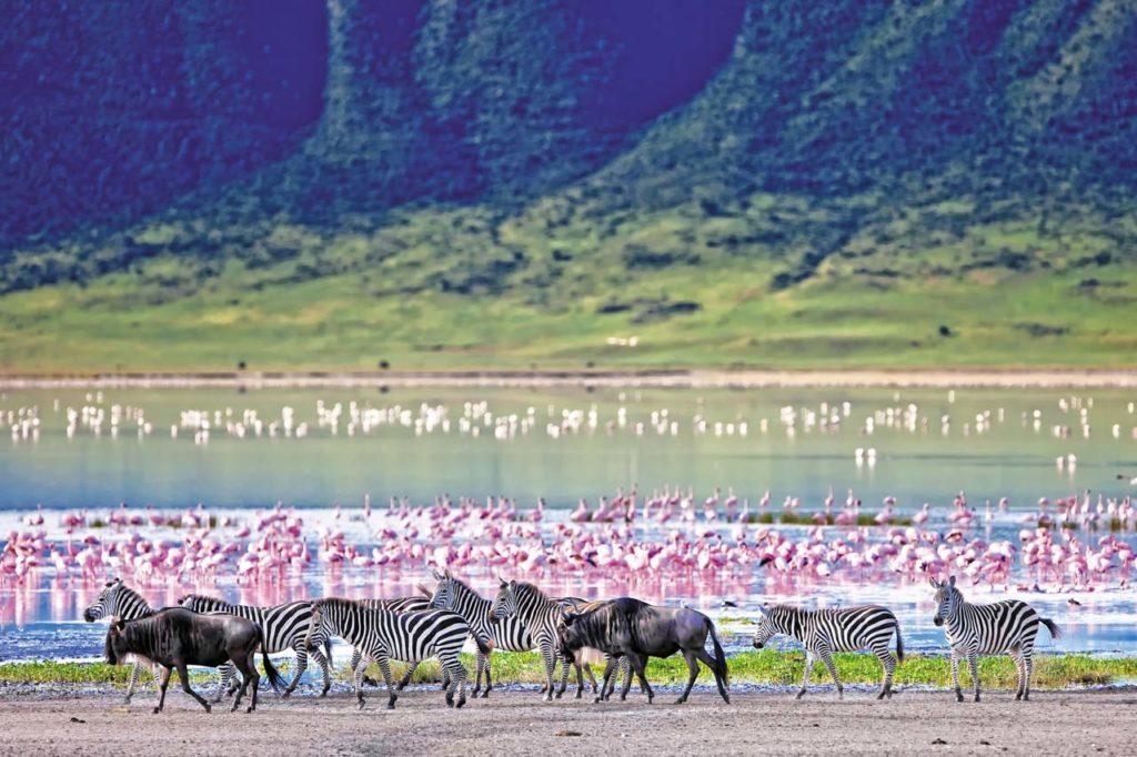 7 - Ngorongoro (crédit Safrans du Monde)