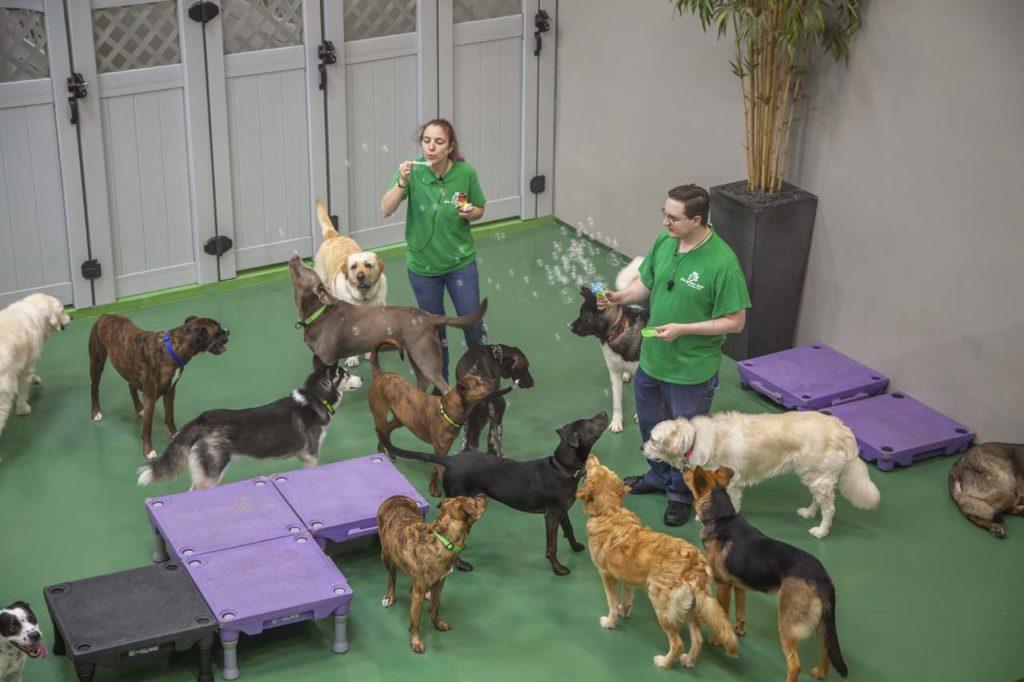 Final Green Leaf Pet Resorts_021