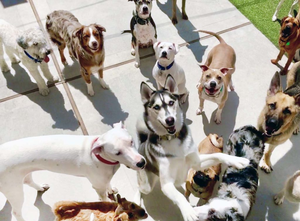 canine-club