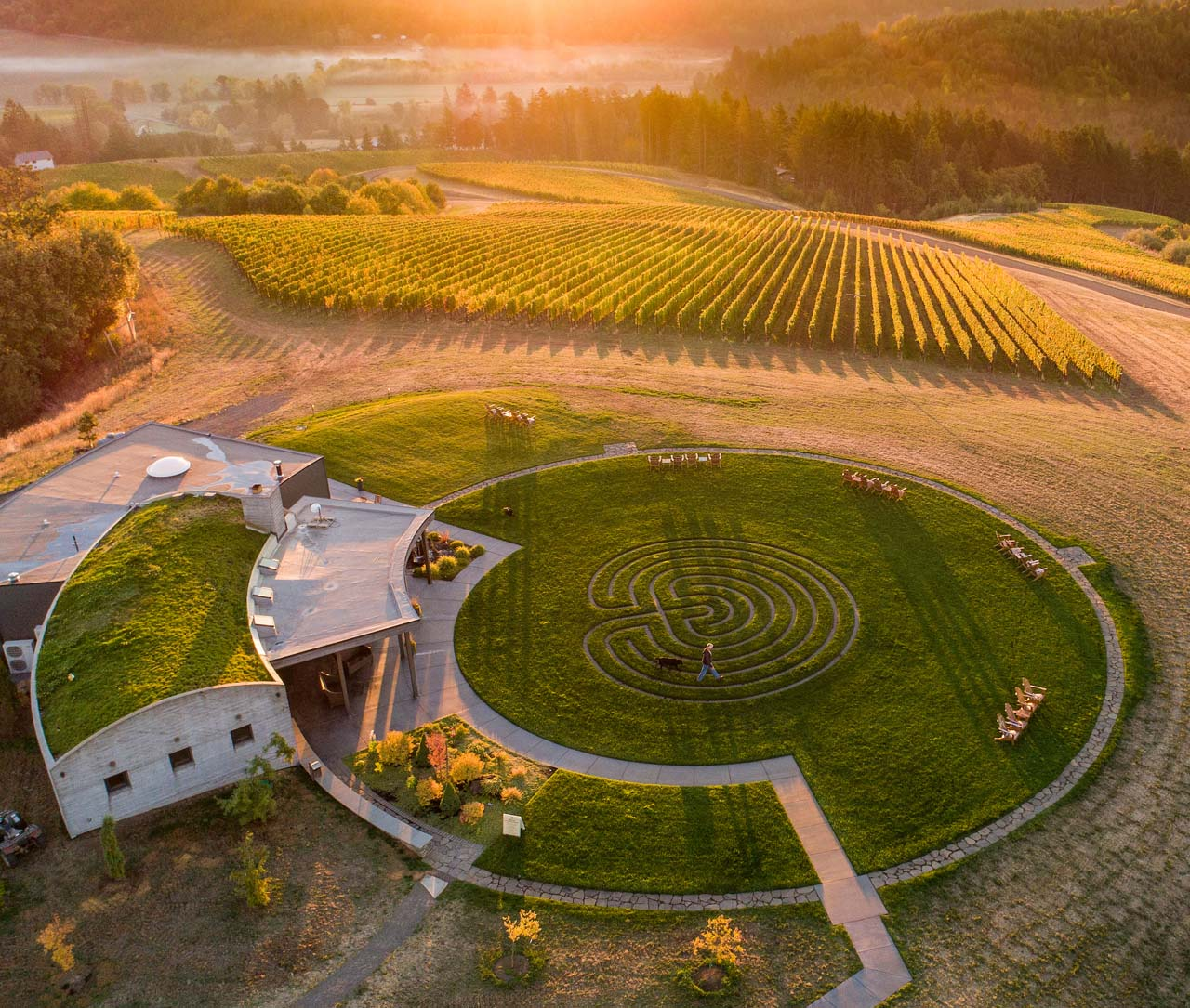 GENERAL IMAGE-Fairsing Vineyard drone_20180928_045